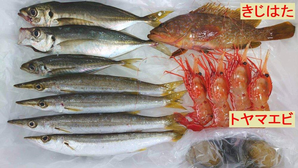 富山湾の魚介類。アジ、カマス、とやまえび、キジハタ