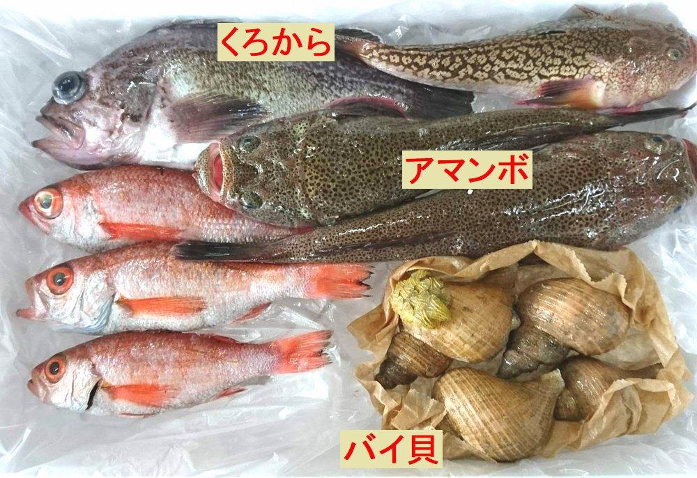 富山湾の魚介類。のどぐろ、クロカラ、アマンボ、バイ貝