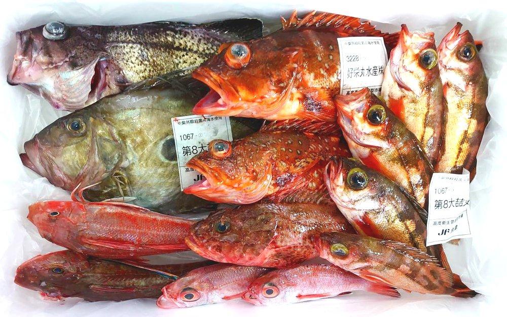 魚津港の朝どれ魚たち